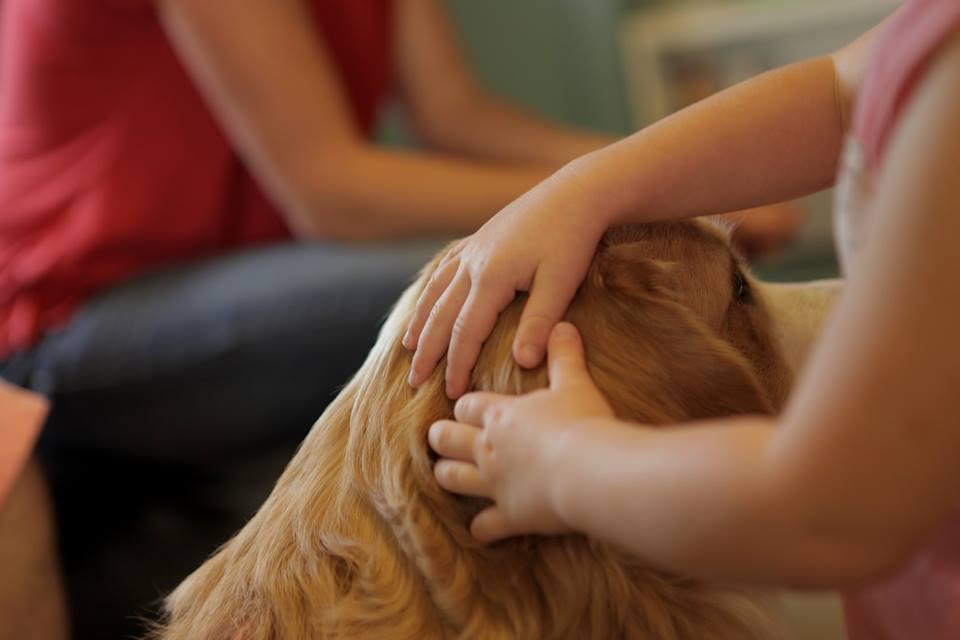 Très jeune déficient visuel avec ses deux mains sur la tête de son chien d'accompagnement.